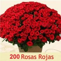 ROSAS 200
